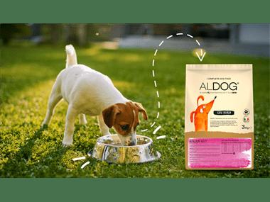 alimento-completo-per-cani