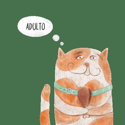 cibo-secco-per-gatti