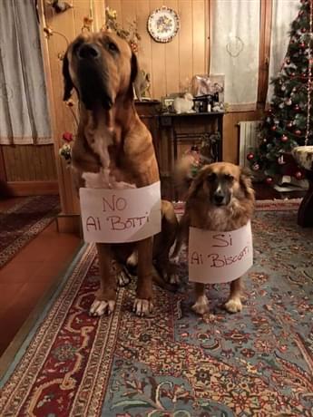 come proteggere i cani dai botti di capodanno