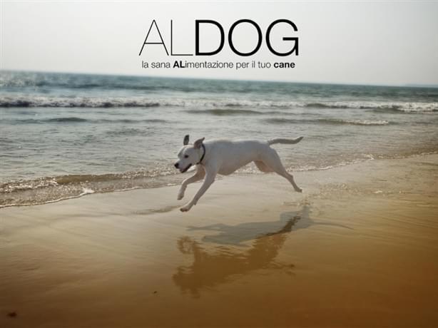 Consigli utili su come difendere il cane dall'afa estiva