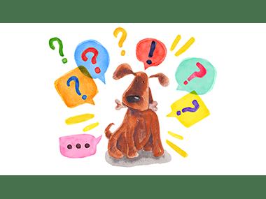 Curiosita sui cani pensate di sapere tutto sul mondo canino ANTEPRIMA