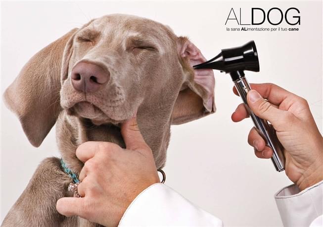 Istruzioni per le detrazioni veterinarie per cani guida e attività di allevamento