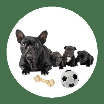 miglior-cibo-secco-per-cani-cuccioli