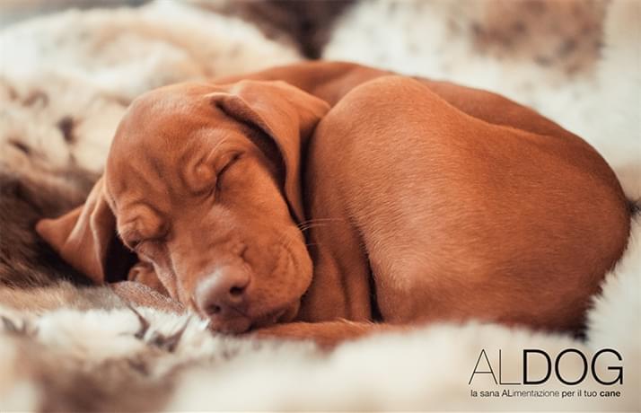 Pillole e consigli su come difendere il tuo cane dal freddo